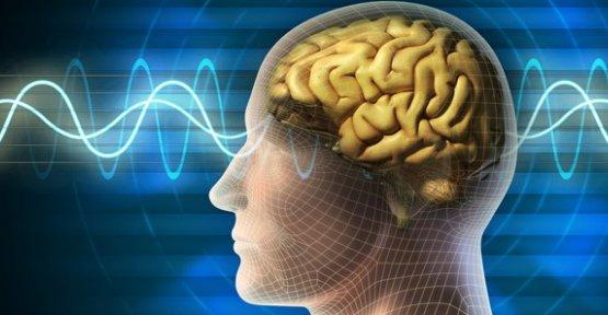 İnsan beyninin kapasitesi hesaplandı