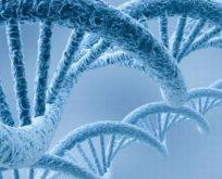Saç telinden DNA testi nasıl yapılır?