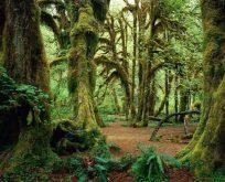 İğneada longoz ormanlarına yolculuk…
