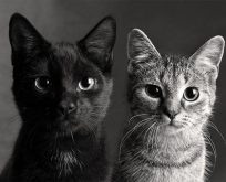 'Hayvanlara kötü davrananlar potansiyel suçlu'