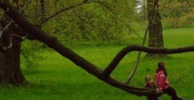 Geleceğimiz için, çocuklarımız için ağaç