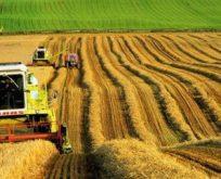 Küresel ısınma tahıl üretimine tehdit