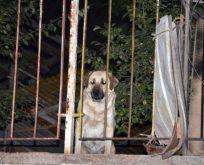Faciayı önleyen kahraman köpek