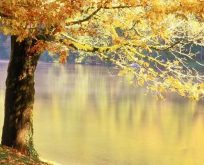 Ödüllü roman Rumeli'de Hazan Mevsimi