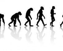 Darwin ve Evrim Teorisi artık müfredatta yok