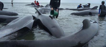 Balinalar intihar eder mi?