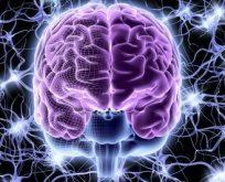 Romanlar yoluyla beyni öğrenmeye ne dersiniz?