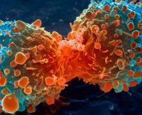 İsrailli bilim insanları kanseri kökten yok eden tedaviyi bulduklarını açıkladı