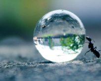 Erk hayvanı olarak karınca